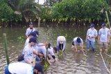 FT Unhas tanam 6.000 bibit mangrove di Lakkang Tallo