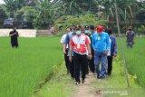 Mentan mendorong pengembangan pertanian di perkotaan