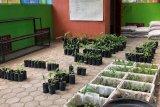 Minat berkebun naik, Kebun Plasma di Yogyakarta buka layanan pada Sabtu-Minggu