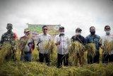 DPRD Kotim dukung terobosan tingkatkan produksi pertanian