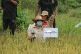 Petani di Gunung Mas diminta manfaatkan lahan tidur
