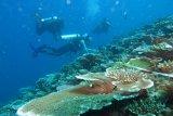 KKP lakukan  survei lokasi untuk program pemulihan ekonomi terumbu karang