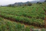 Pemkab Bantul menganggarkan Rp1 miliar bangun sumur dalam di Agrowisata Nawungan