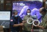 Manfaatkan satelit untuk lindungi Gajah Sumatra, PT CPI serahkan GPS Collar dan Camera Trap