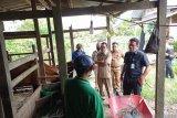 DPMPTSP melihat potensi peternakan sapi di Kaltara