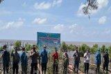 Kawasan hutan mangrove di Kalimantan Tengah jadi  program padat karya