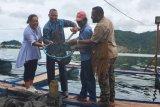 Papua Muda Inspiratif kembangkan budidaya ikan air tawar di danau Sentani
