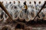 Pekerja menjemur rotan mentah untuk bahan baku industri mebel dan kerajinan rumah tangga di Banda Aceh, Aceh, Sabtu (17/10/2020). Himpunan Industri Mebel dan Kerajinan Indonesia (HIMKI) minta Pemerintah tidak mengizinkan ekspor rotan mentah karena dianggap bertentangan dengan program hilirisasi industri yang telah dicanangkan sejak 2010. Antara Aceh/Irwansyah Putra.