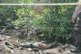Geger, warga temukan mayat di hutan bakau Desa Banglas Barat