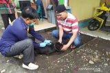 26 provinsi di Indonesia endemik rabies