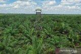 Hutan alam di Riau hanya tinggal seluas 1.442.669 hektare
