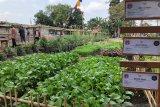 Pemkot Yogyakarta kembangkan Lumbung Pangan Mataram di tujuh lokasi