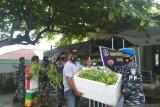 Lanal Melonguane bagikan panen sayur kepada masyarakat Miangas