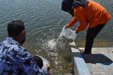 Petugas menebar benih ikan bantuan dari Pemprov Jawa Timur di Embung Pilangbango Kota Madiun, Jawa Timur, Selasa (20/10/2020). Pemprov Jawa Timur melalui Dinas Kelautan dan Perikanan memberikan bantuan 130 ribu benih ikan jenis lokal antara lain tawes, nila, tombro, wader cengkareng guna meningkatkan konsumsi ikan bagi masyarakat. Antara Jatim/Siswowidodo/zk
