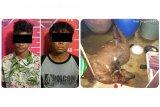 Hendak jual daging kambing hasil curian, remaja ini diciduk polisi