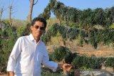 Ketua DPRD Sabu Raijua imbau paslon patuhi prokes dalam kampanye