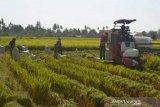 Petani di Baubau lakukan uji coba mesin padi bantuan Kementan