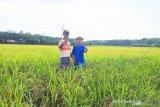 Kotabaru percepat tanam padi 1.000 hektare