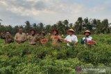 Diikutsertakan dalam UNPSA PBB, program pangan Kulon Progo