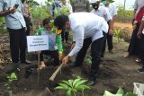 Pemprov Babel dorong petani budidayakan tanaman porang