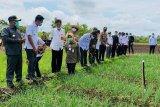 Plt Gubernur Kalteng tinjau food estate Barito Utara