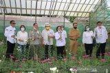 Kementan menjamin ketersediaan bunga krisan di Tomohon untuk ekspor