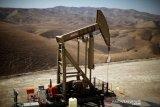 Harga minyak naik setelah Trump mengklaim kemenangan pemilihan AS yang ketat