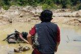 Polisi Bangka Barat tangkap penambang liar di hutan Menumbing