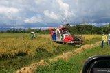 Bulog Sulawesi Tenggara serap beras petani 300 ton per hari