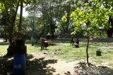 Pemkot Surakarta anggarkan Rp1,8 miliar benahi  Balekambang