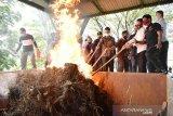 Polres Payakumbuh musnahkan ganja hampir 100 kilogram