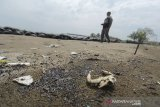 Warga berada di sekitar ceceran minyak mentah yang mencemari pantai Balongan, Indramayu, Jawa Barat, Jumat (23/10/2020). Ceceran minyak berbentuk gumpalan kecil berwarna hitam yang diduga merupakan crude oil (minyak mentah) tersebut mencemari bibir pantai sepanjang 7 kilometer. ANTARA JABAR/Dedhez Anggara/agr