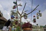 Seorang anak merawat tanaman hias di halaman rumah komplek Perkebunan PTPN VIII Dayeuhmanggung, Cilawu, Kabupaten Garut, Jawa Barat, Jumat (23/10/2020). Komplek perkebunan ramah lingkungan yang mengembangkan sejumlah tanaman hias tersebut memanfaatkan sampah plastik guna mempercantik halaman rumah. ANTARA JABAR/Candra Yanuarsyah/agr