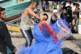 Program pangan alternatif harus sentuh perekonomian nelayan berbagai daerah