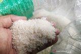 Pemkab Bartim kaji produksi beras premium