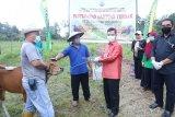 Pjs Gubernur serahkan bantuan ternak sapi