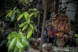Pemilik rumah, Iswara (82) menunjukan sebuah bunga bangkai raksasa jenis Amorphophallus paeoniifolius yang mekar di pekarangan rumahnya di Arcamanik, Bandung, Jawa Barat, Senin (26/10/2020). Pemilik rumah mengatakan bunga bangkai setinggi 60 sentimeter tersebut ditemukan pertama kali pada 23 Oktober 2020 setelah sebelumnya dia menanam tanaman suweg (sejenis porang) di pot rumahnya 12 tahun yang lalu. ANTARA JABAR/Raisan Al Farisi/agr