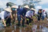 BRG gelontorkan Rp13,6 miliar revitalisasi lahan pertanian di Kalteng