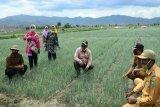 Plt Gubernur Kalteng tinjau kawasan peternakan dan budidaya bawang di Bima