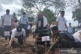 PLN NTT gandeng Undana tanam pohon untuk bahan baku EBT