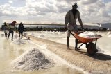 Potensi tambak garam Sabu Raijua capai 2.000 hektare