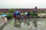 Warga Doplang Boyolali budidaya cacing sutera di tengah pandemi