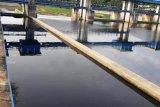 Sungai Way Sekampung di Lampung Timur kembali tercemar limbah