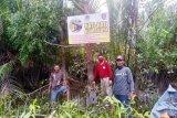 BKSDA Sampit pasang papan peringatan di lokasi serangan buaya