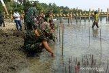 Kodim Poso gelar penanaman bibit mangrove di Pantai Madale