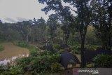 Pengunjung menikmati suasana wisata Situ Mustika di Purwaharja, Kota Banjar, Jawa Barat, Rabu (28/10/2020). Wisata Situ Mustika yang berada di wilayah Perum Perhutani KPH Ciamis dengan luas lahan 8,5 hektare dikembangkan menjadi wisata alam oleh Lembaga Masyarakat Desa Hutan (LMDH) Mustika bekerjasama dengan perusahaan swasta dengan menyuguhkan konsep ramah lingkungan. ANTARA JABAR/Adeng Bustomi/agr