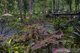 Pengunjung menikmati suasana wisata Situ Mustika di Purwaharja, Kota Banjar, Jawa Barat, Rabu (28/10/2020). Wisata Situ Mustika yang berada diwilayah Perum Perhutani KPH Ciamis dengan luas lahan 8,5 hektare dikembangkan menjadi wisata alam oleh Lembaga Masyarakat Desa Hutan (LMDH) Mustika bekerjasama dengan perusahaan swasta dengan menyuguhkan konsep ramah lingkungan dengan membiarkan pepohonan tetap tumbuh. ANTARA JABAR/Adeng Bustomi/agr