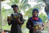 Pembudidaya ikan lele Kampung Kamal Kutai Kaltim produksi abon