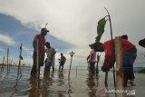 Komunitas pecinta alam Parimo dukung program KLHK sejuta bakau