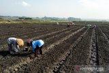 DPP Kulon Progo minta petani segera mengisi e-RDKK pupuk bersubsidi